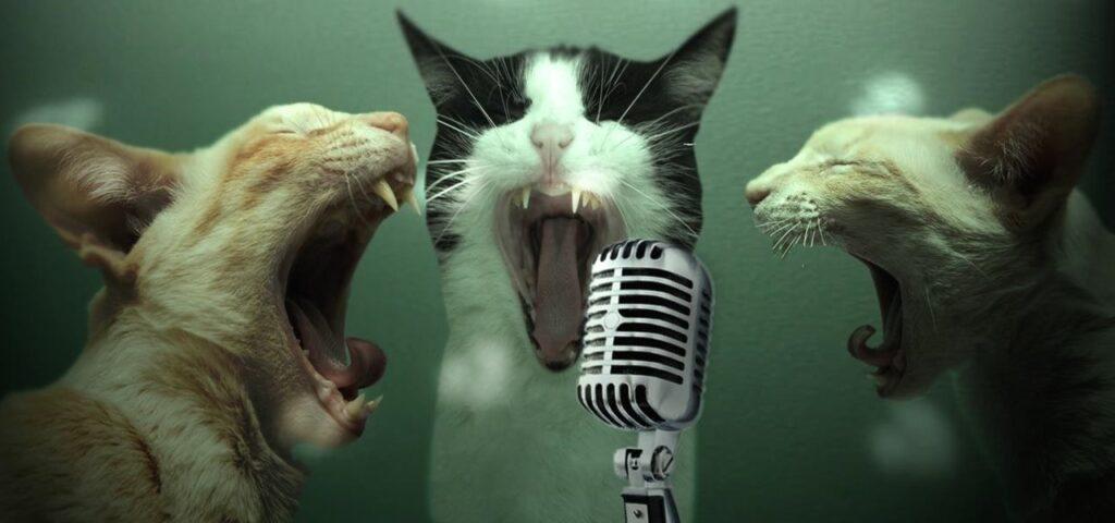 Funny Photo of Cat Karaoke